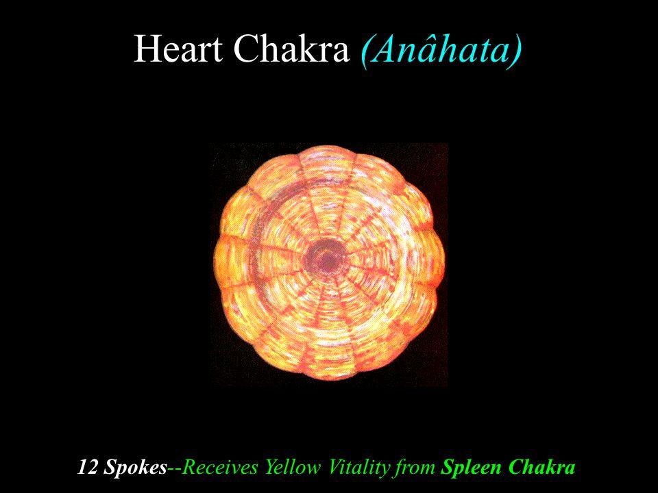 Heart Chakra (Anâhata) 12 Spokes--Receives Yellow Vitality from Spleen Chakra