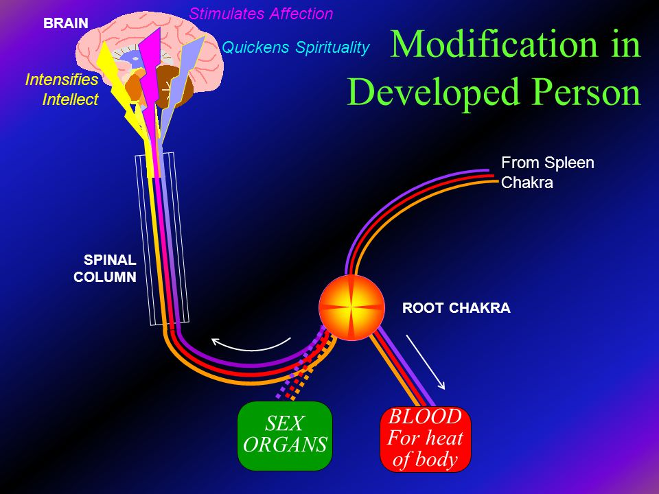 Modification in Developed Person SEX ORGANS BLOOD For heat of body From Spleen Chakra ROOT CHAKRA BRAIN SPINAL COLUMN Stimulates Affection Quickens Sp