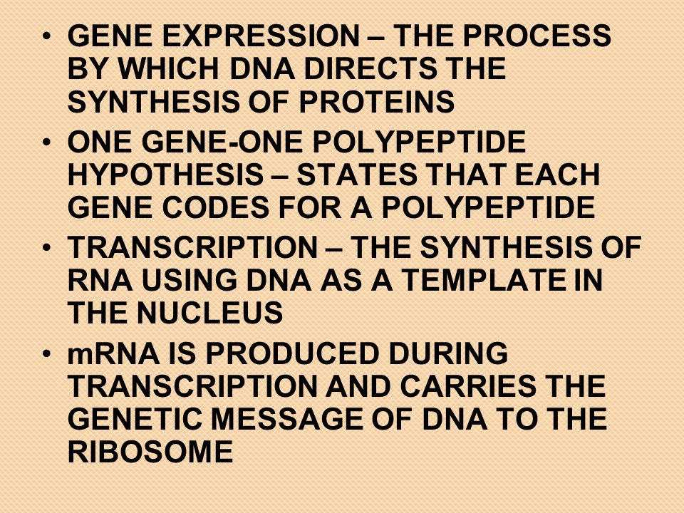 DURING TRANSCRIPTION, ONLY ONE STRAND OF DNA IS TRANSCRIBED CALLED THE TEMPLATE STRAND mRNA PRODUCED IS THE COMPLEMENTARY TO THE ORIGINAL DNA STRAND mRNA BASE TRIPLETS ARE CODONS AND ARE WRITTEN IN THE 5 TO 3 DIRECTION MORE THAN ONE CODON CODES FOR EACH OF THE 20 AMINO ACIDS