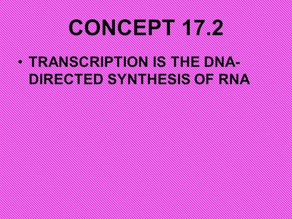 http://www.johnkyrk.com/DNAtranslation.ht mlhttp://www.johnkyrk.com/DNAtranslation.ht ml