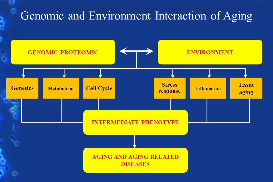GENOMIC-PROTEOMICENVIRONMENT Genetics Metabolism Cell Cycle Stress response Inflamation Tissue aging INTERMEDIATE PHENOTYPE AGING AND AGING RELATED DISEASES Genomic and Environment Interaction of Aging