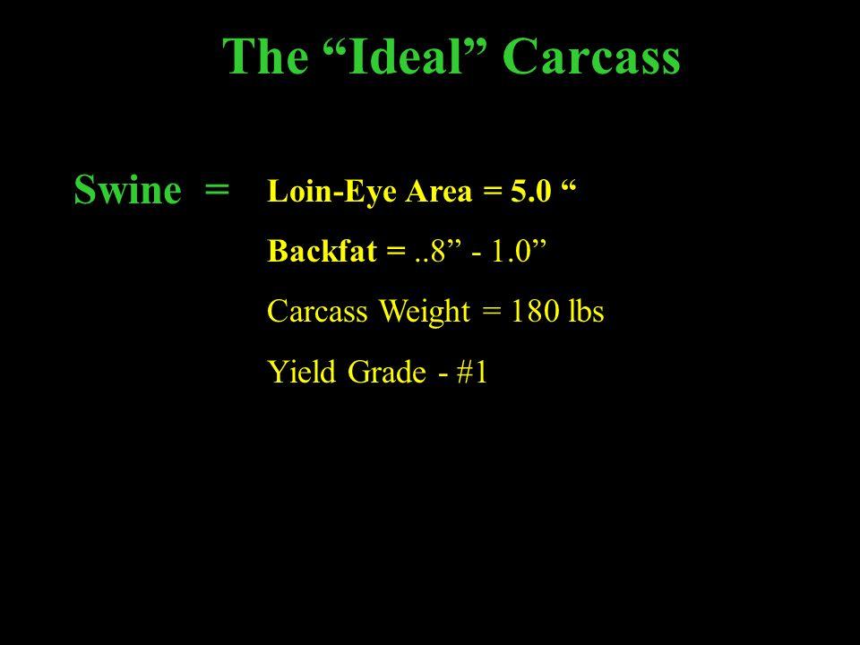 The Ideal Carcass Swine = Loin-Eye Area = 5.0 Backfat =..8 - 1.0 Carcass Weight = 180 lbs Yield Grade - #1