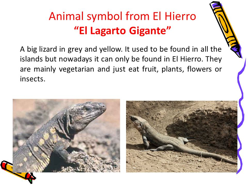 Animal symbol from El Hierro El Lagarto Gigante A big lizard in grey and yellow.