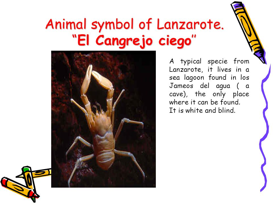 Animal symbol of Lanzarote.El Cangrejo ciego A typical specie from Lanzarote, it lives in a sea lagoon found in los Jameos del agua ( a cave), the only place where it can be found.
