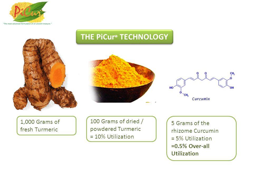 1,000 Grams of fresh Turmeric 100 Grams of dried / powdered Turmeric = 10% Utilization 5 Grams of the rhizome Curcumin = 5% Utilization =0.5% Over-all Utilization THE PiCur ® TECHNOLOGY