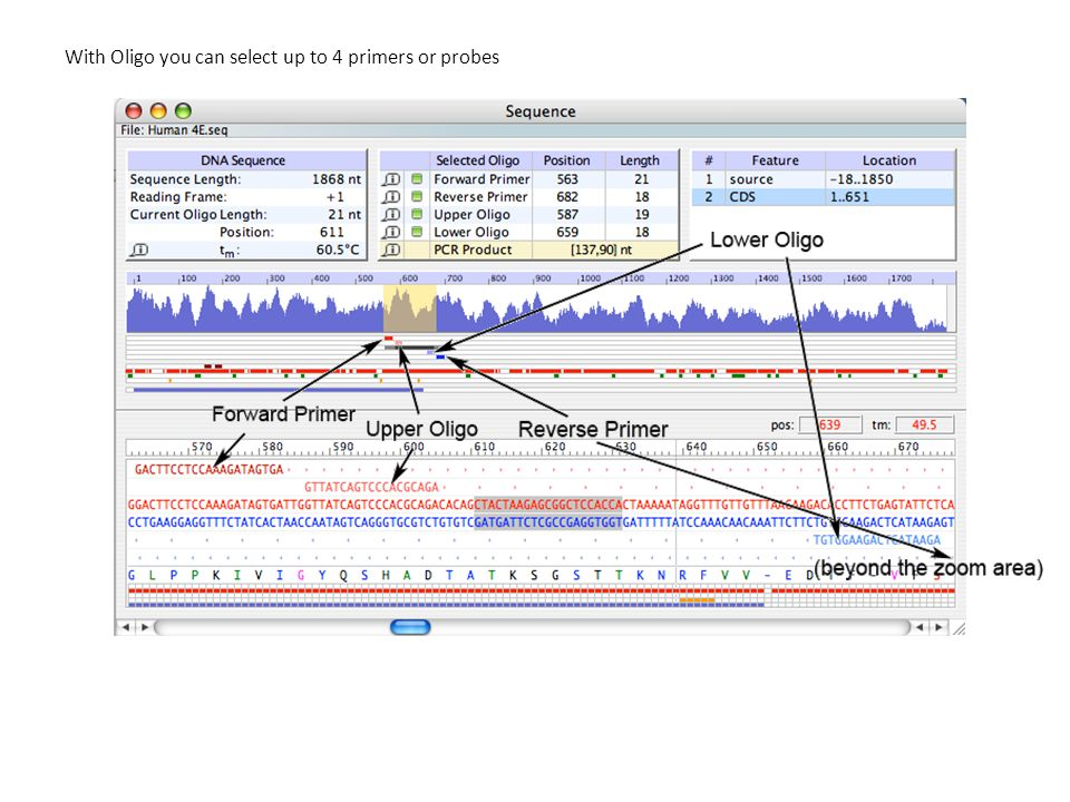 With Oligo you can select up to 4 primers or probes