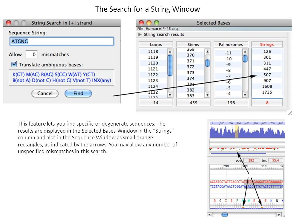 The Search for a String Window This feature lets you find specific or degenerate sequences. The results are displayed in the Selected Bases Window in