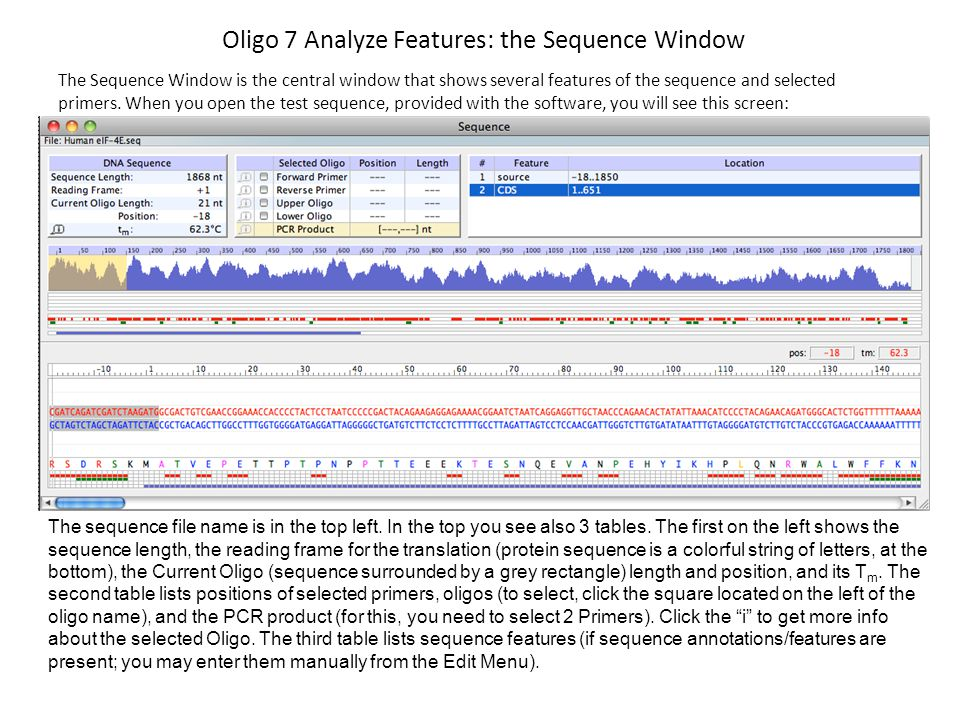 Oligo 7 Analyze Features: the Sequence Window The Sequence Window is the central window that shows several features of the sequence and selected prime