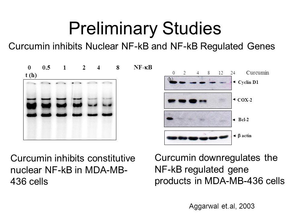0 0.5 1 2 4 8 t (h) NF- B Curcumin inhibits constitutive nuclear NF-kB in MDA-MB- 436 cells Cyclin D1 COX-2 actin Bcl-2 0 2 4 8 12 24 Curcumin (h) Cur