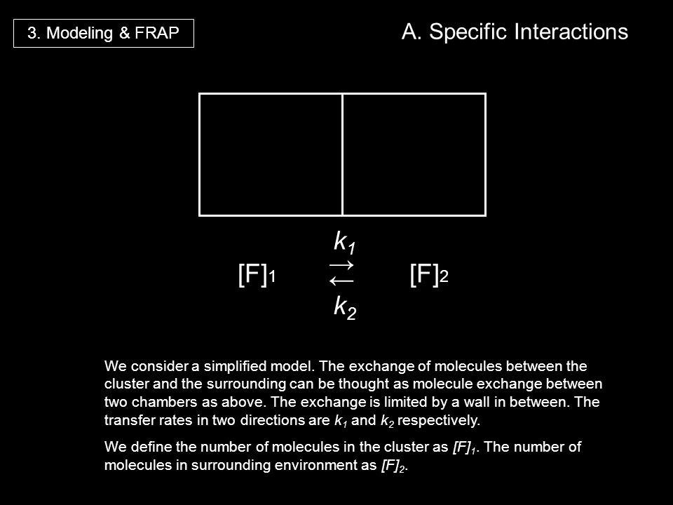 [F] 1 k1k1 k2k2 [F] 2 3. Modeling & FRAP A. Specific Interactions We consider a simplified model. The exchange of molecules between the cluster and th
