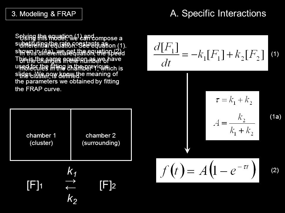 [F] 1 k1k1 k2k2 [F] 2 3. Modeling & FRAP A. Specific Interactions Using this model, we can compose a differential equation. See equation (1). In this