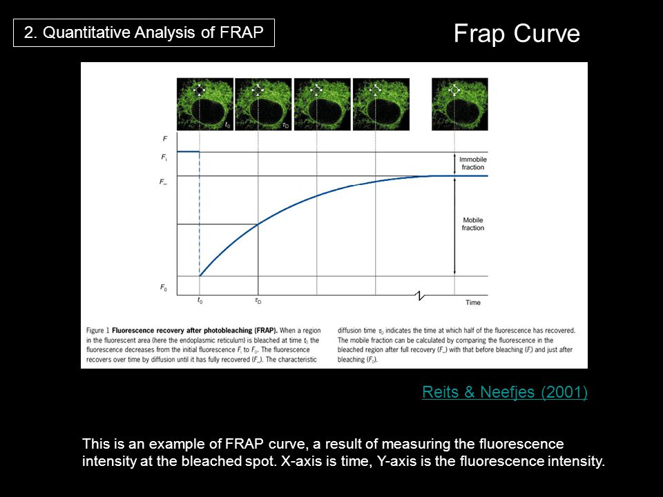 Reits & Neefjes (2001) Frap Curve 2. Quantitative Analysis of FRAP This is an example of FRAP curve, a result of measuring the fluorescence intensity