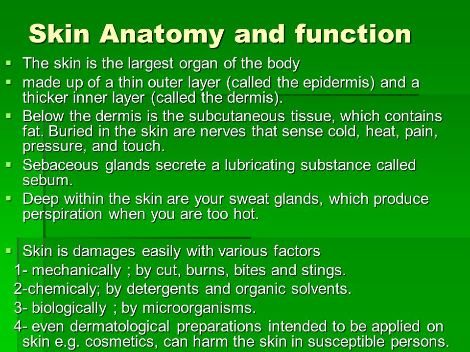 Skin Anatomy and function The skin is the largest organ of the body The skin is the largest organ of the body made up of a thin outer layer (called th
