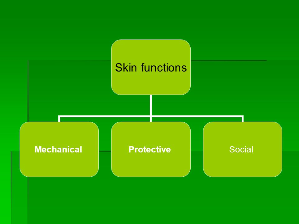 Skin functions MechanicalProtectiveSocial