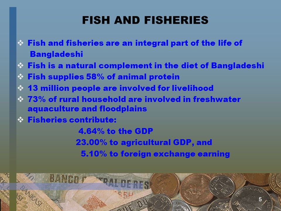 5 FISH AND FISHERIES Fish and fisheries are an integral part of the life of Bangladeshi Fish is a natural complement in the diet of Bangladeshi Fish s