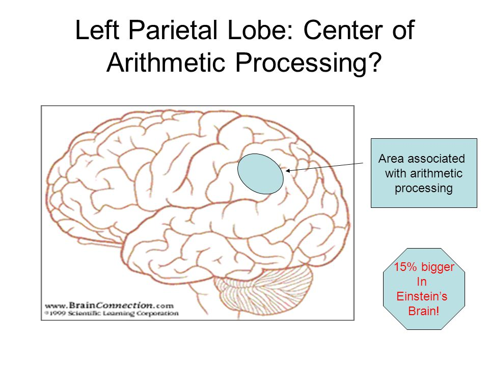 Visual-Spatial Functioning and Mathematics Were talking primarily about processing in the parietal lobe (site of spatial processing) and occipital lob
