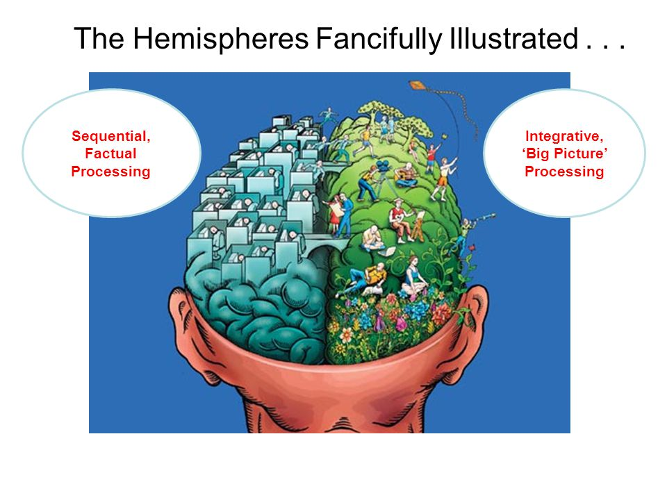 DA BRAIN: Its two hemispheres and four lobes