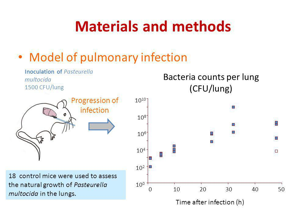 Inoculation of Pasteurella multocida 1500 CFU/lung Model of pulmonary infection Materials and methods Progression of infection 01020304050 Time after
