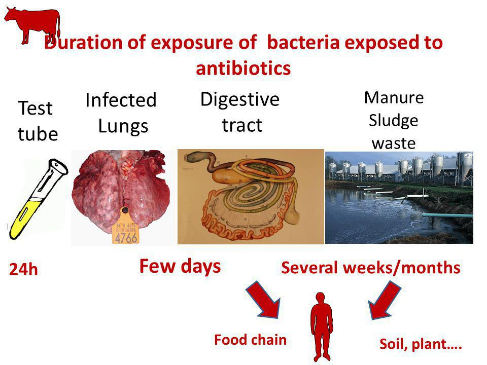 Duration of exposure of bacteria exposed to antibiotics Infected Lungs Digestive tract Few days Manure Sludge waste Food chain Several weeks/months So