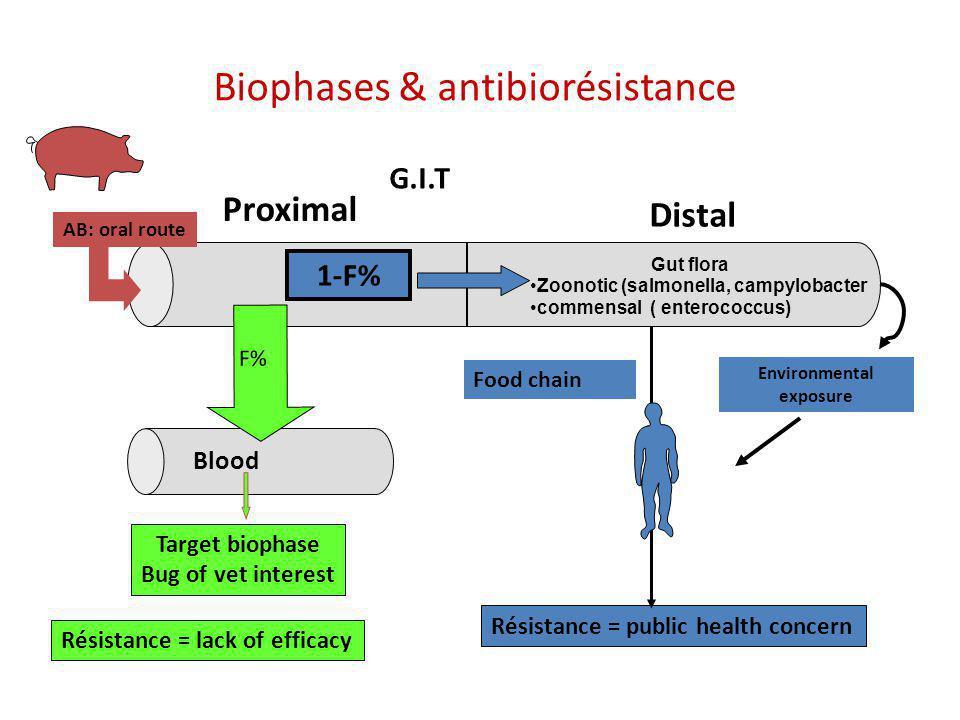 Biophases & antibiorésistance G.I.T Proximal Distal Résistance = lack of efficacy Blood Gut flora Zoonotic (salmonella, campylobacter commensal ( ente