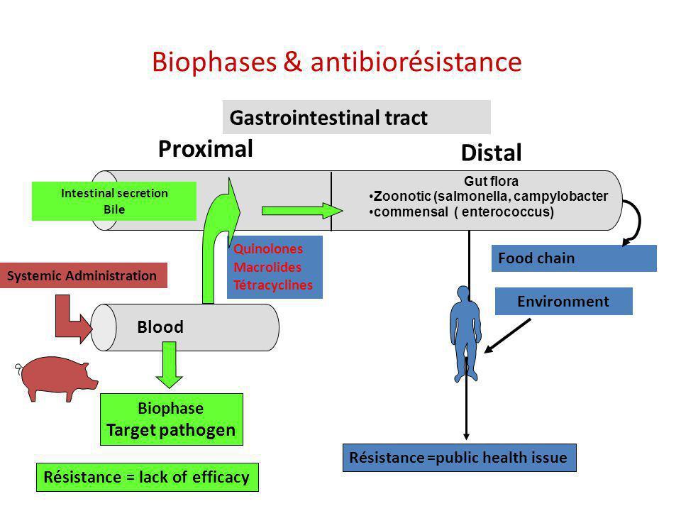 Biophases & antibiorésistance Gastrointestinal tract Proximal Distal Intestinal secretion Bile Résistance = lack of efficacy Résistance =public health