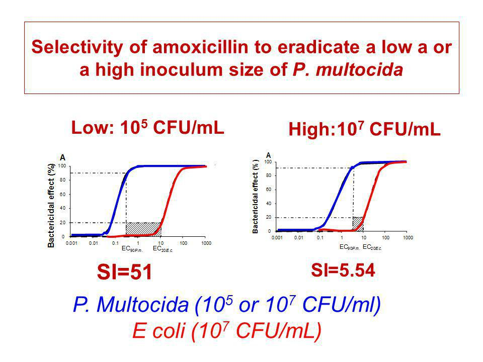 Selectivity of amoxicillin to eradicate a low a or a high inoculum size of P. multocida SI=51 SI=5.54 Low: 10 5 CFU/mL High:10 7 CFU/mL P. Multocida (