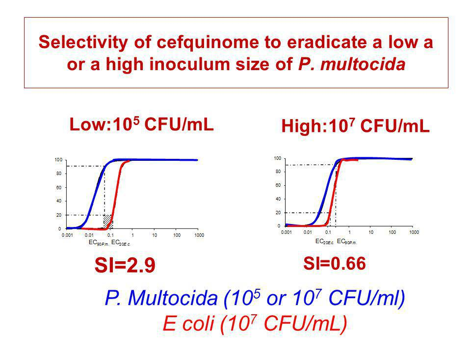 Selectivity of cefquinome to eradicate a low a or a high inoculum size of P. multocida SI=2.9 SI=0.66 Low:10 5 CFU/mL High:10 7 CFU/mL P. Multocida (1