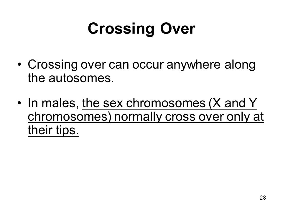 28 Crossing Over Crossing over can occur anywhere along the autosomes. In males, the sex chromosomes (X and Y chromosomes) normally cross over only at