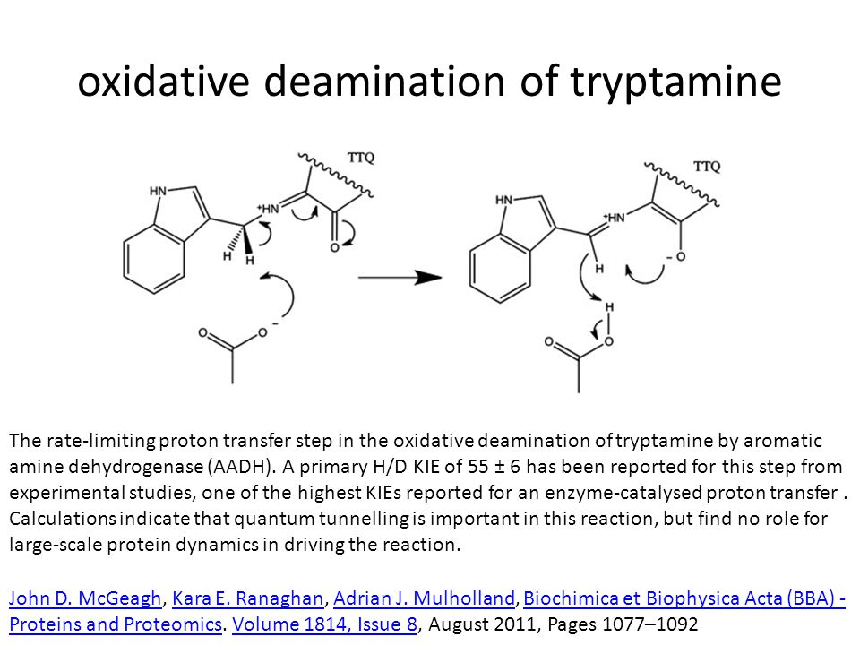 oxidative deamination of tryptamine The rate-limiting proton transfer step in the oxidative deamination of tryptamine by aromatic amine dehydrogenase
