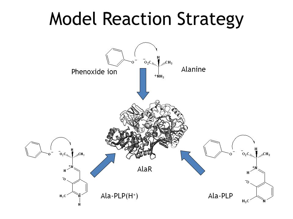 Model Reaction Strategy AlaR Phenoxide ion Alanine Ala-PLP(H + )Ala-PLP