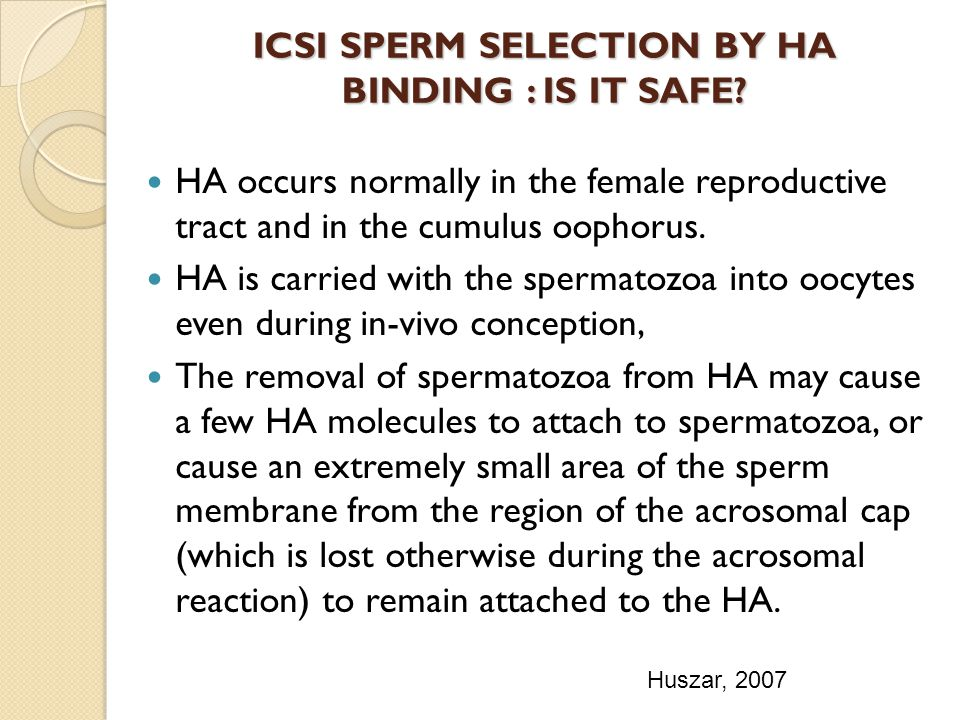 ICSI SPERM SELECTION BY HA BINDING : IS IT SAFE? HA occurs normally in the female reproductive tract and in the cumulus oophorus. HA is carried with t