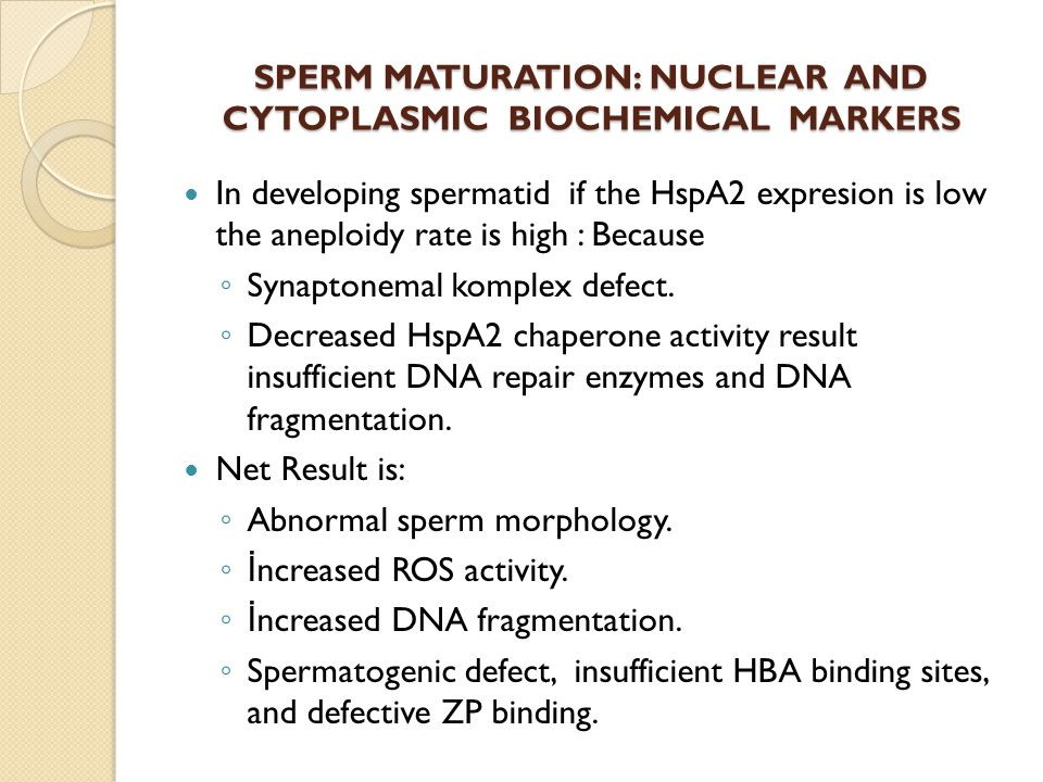 In developing spermatid if the HspA2 expresion is low the aneploidy rate is high : Because Synaptonemal komplex defect. Decreased HspA2 chaperone acti