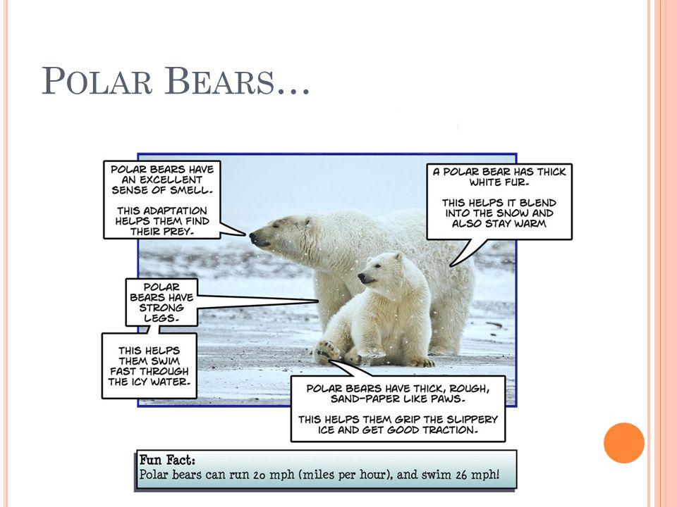 P OLAR B EARS …
