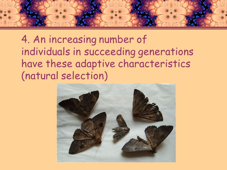 4. An increasing number of individuals in succeeding generations have these adaptive characteristics (natural selection)