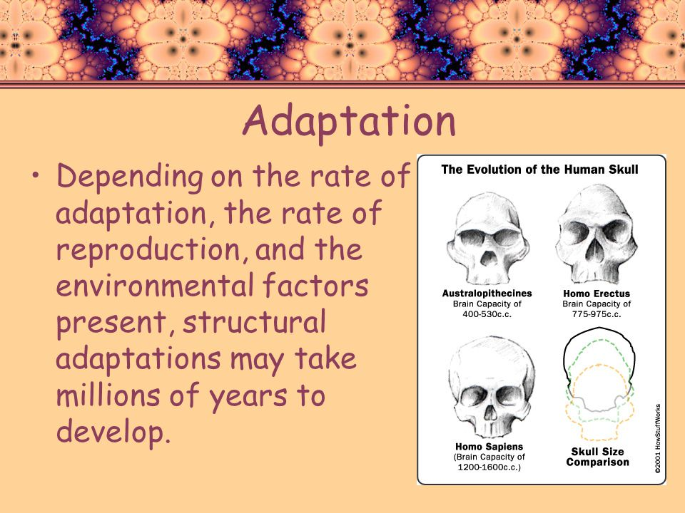 Adaptation Depending on the rate of adaptation, the rate of reproduction, and the environmental factors present, structural adaptations may take milli