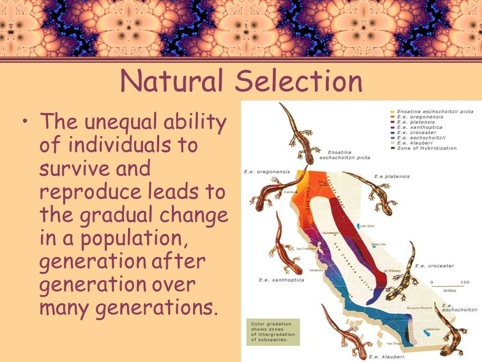 Natural Selection The unequal ability of individuals to survive and reproduce leads to the gradual change in a population, generation after generation