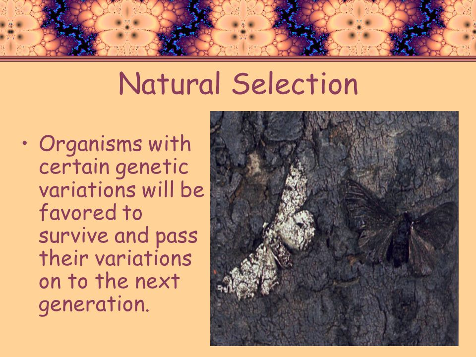 Natural Selection Organisms with certain genetic variations will be favored to survive and pass their variations on to the next generation.