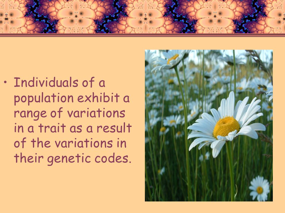 Individuals of a population exhibit a range of variations in a trait as a result of the variations in their genetic codes.
