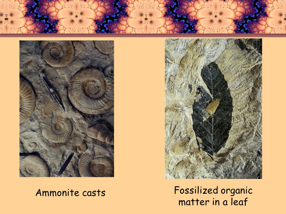 Ammonite casts Fossilized organic matter in a leaf