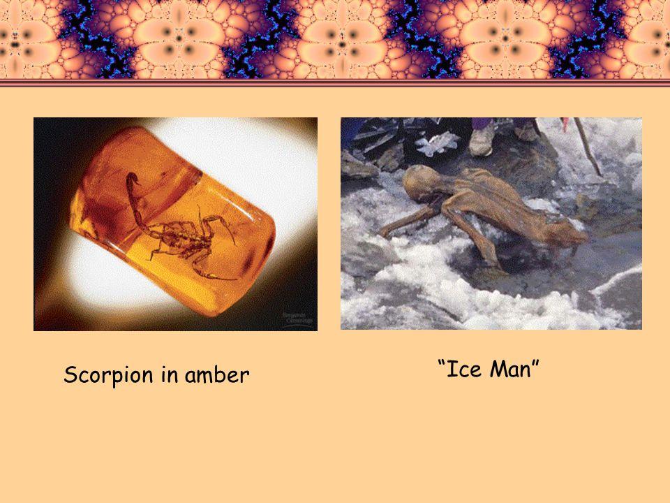 Scorpion in amber Ice Man
