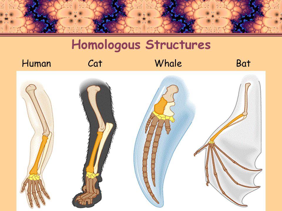 Homologous Structures HumanCatWhaleBat