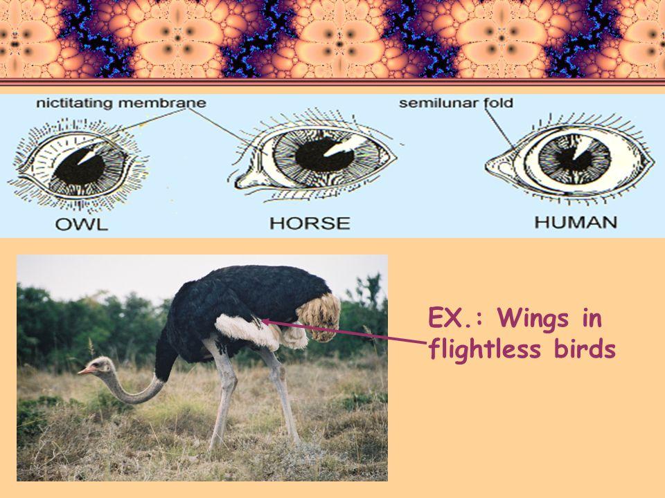 EX.: Wings in flightless birds