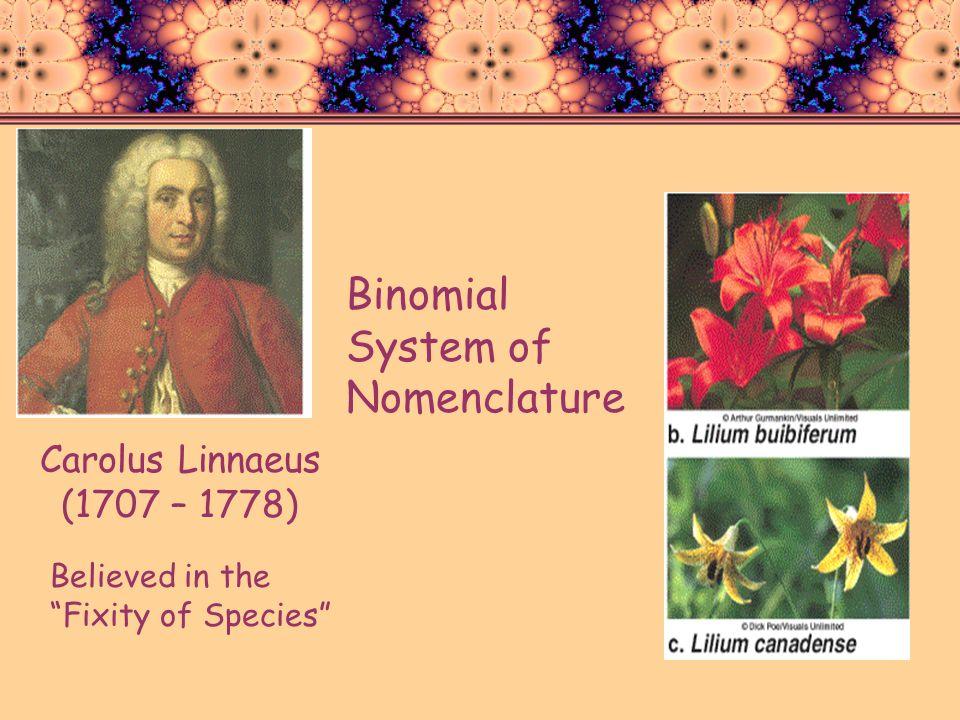 Carolus Linnaeus (1707 – 1778) Believed in the Fixity of Species Binomial System of Nomenclature
