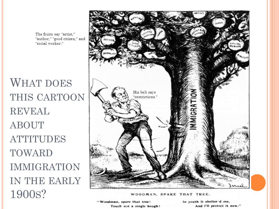 W HAT DOES THIS CARTOON REVEAL ABOUT ATTITUDES TOWARD IMMIGRATION IN THE EARLY 1900 S ? The fruits say artist, author, good citizen, and social worker