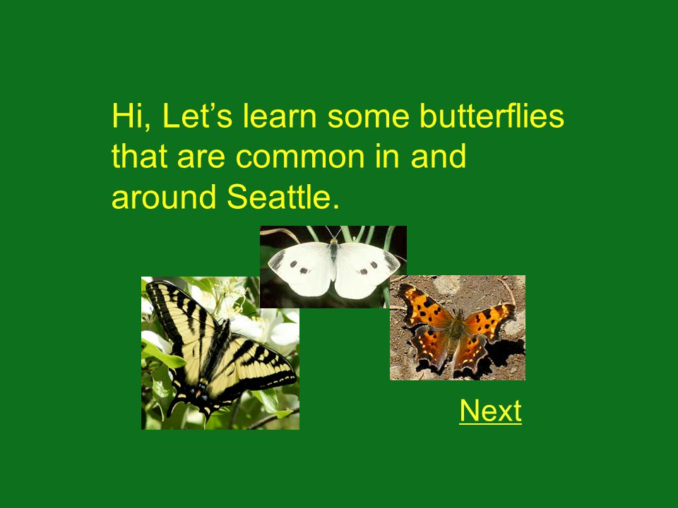 Hi, Lets learn some butterflies that are common in and around Seattle. Next