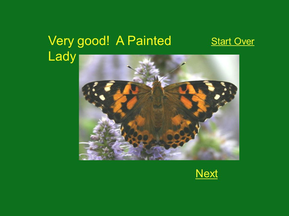 Very good! A Painted Lady Next Start Over
