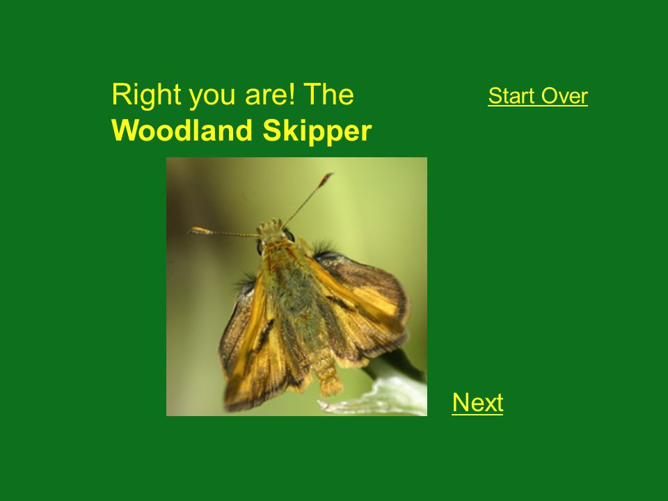 Right you are! The Woodland Skipper Next Start Over
