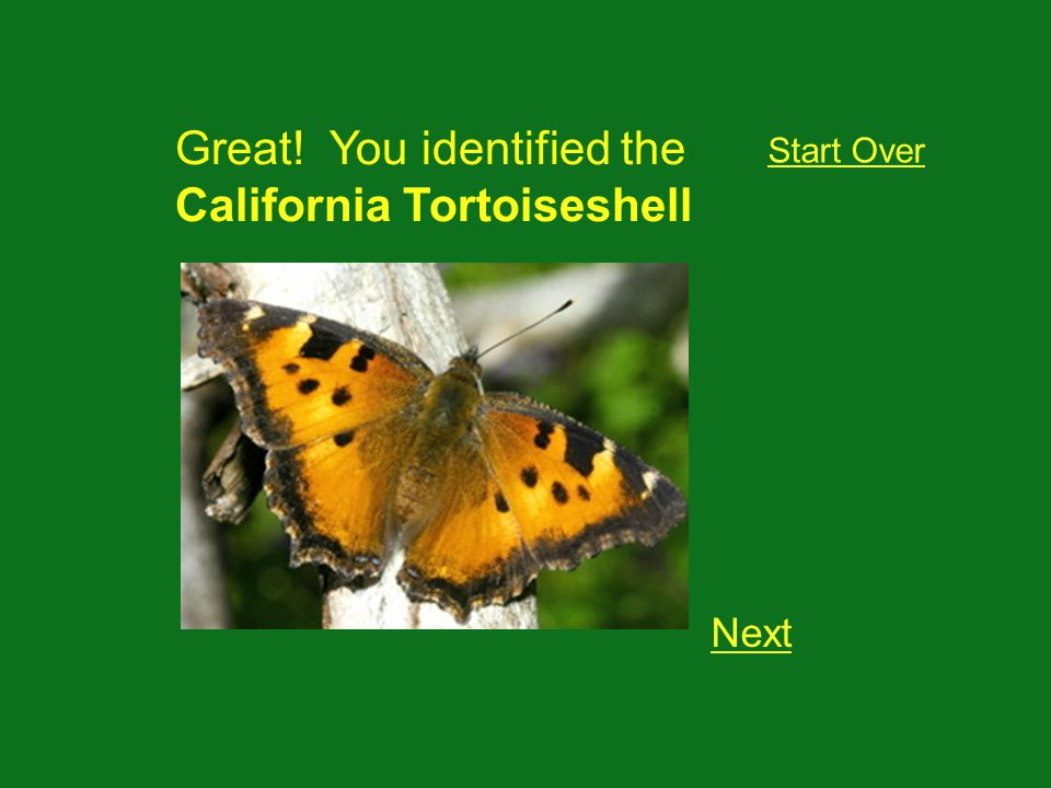 Great! You identified the California Tortoiseshell Next Start Over