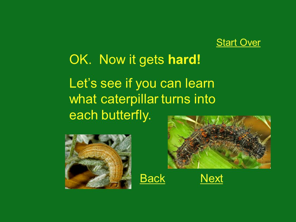 OK. Now it gets hard. Lets see if you can learn what caterpillar turns into each butterfly.