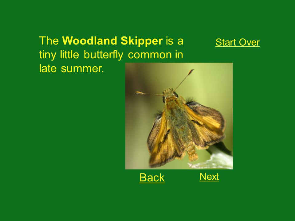 This is a: Start Over Lorquins Admiral Woodland Skipper Cabbage White